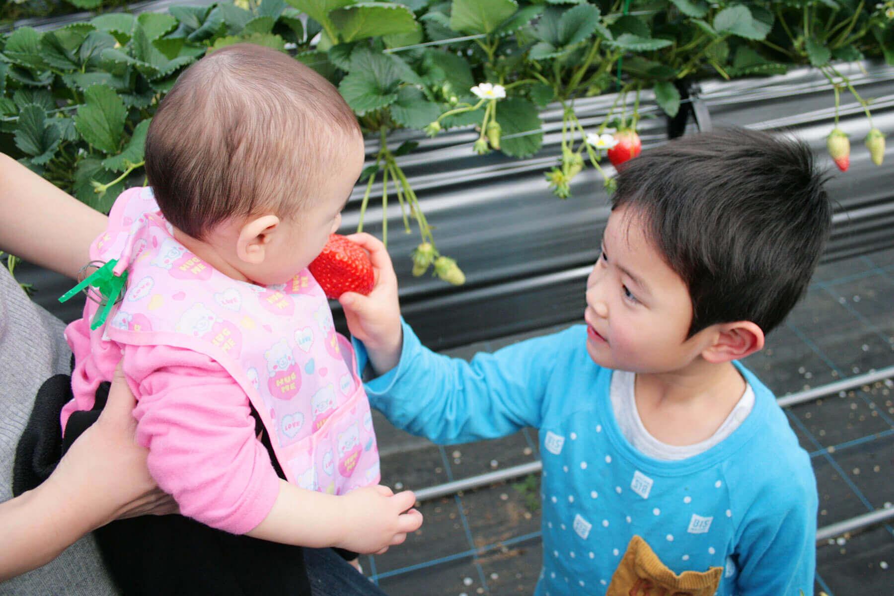 赤ちゃんに苺を食べさせる男の子