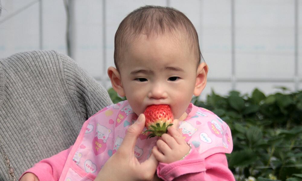 大きないちごを頬張る赤ちゃん